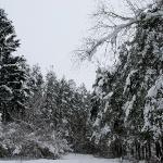Парк с. Ленинское зимой. 2004 год