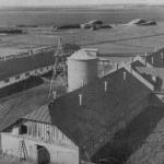 Молочно-товарная ферма колхоза им. В.И. Ленина.  1940-е гг.