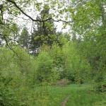 Парк с. Ленинское в мае. 2014 год